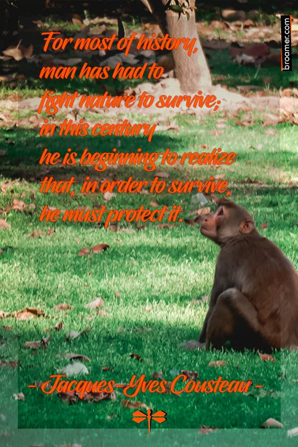 "Monkey See.. Nature quote by Jacques-Yves Cousteau: ""For most of history, man has had to fight nature to survive; in this century he is beginning to realize that, in order to survive, he must protect it."""
