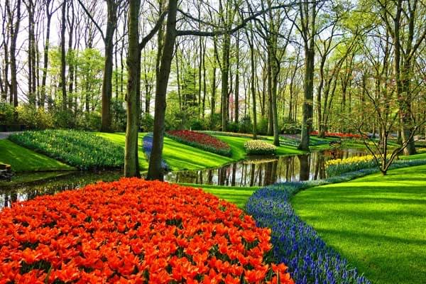 Keukenhof is a place filled with beautiful flowers and tulips ; a must visit if you are into flowers